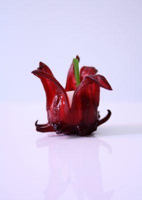 La Fleur d'Hibiscus